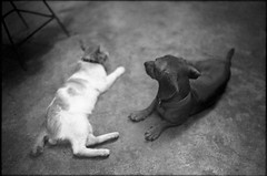img589 (Jurgen Estanislao) Tags: leica white black film 35mm photography kodak g hc110 rangefinder ii ttl eastman m6 nokton voigtlnder jurgen f12 doublex estanislao