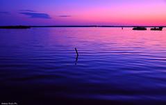 L'ombra della sera... (natale.riili) Tags: parco relax lago san tramonto ombre della colori atmosfera luce sera oasi rossore lipu naturale massaciuccoli migliarino