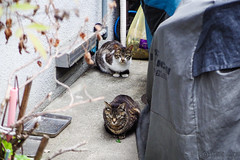 Today's Cat@2016-05-06 (masatsu) Tags: cat pentax catspotting mx1 thebiggestgroupwithonlycats