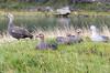 IMGP0444.jpg (gnosmos) Tags: argentinien feuerland patagonien sigmaobjektiv