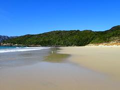 Wind-pruned vegetation Sealers Bay (dracophylla) Tags: newzealand codfishisland whenauhoa