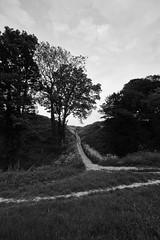 Old Sarum (Crisp-13) Tags: old white black tree monochrome path moat sarum