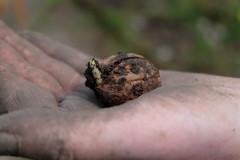 In safety (Goruna) Tags: garden spring hand bokeh walnut nuts germ tenderness sprouting germination walnuss keimen keimung goruna