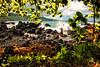 (mojo2u) Tags: hawaii maui keanae hanaroad keanaepeninsula nikon2470mm nikond700