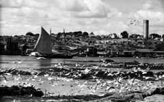 13-2  Harbor at Vinalhaven, Maine 1936 (sequence) (rich701) Tags: blackandwhite bw set 1936 35mm vintage boat maine story negative series sequence vinalhaven filmroll