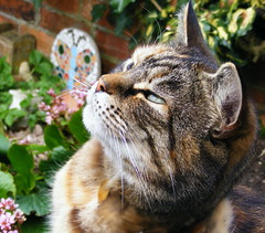 Can you see it too ? (carlene byland) Tags: flowers cat butterfly nose tabby ears erica
