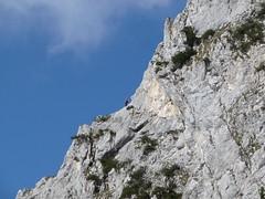 Klettern an der Roten Flüh 2108Hm, NGIDn731799748 (naturgucker.de) Tags: tirol gimpel gehrenspitze sterreich naturguckerde cgntherkainz tannheimroteflh kllenspitze ngidn731799748