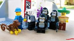 Day 335 (chrisofpie) Tags: chris pie monkey lego doug legos hero heroes minifig roger minifigure bluehat legohero chrisofpie rogeranddoug 365legos dougthechimp