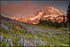 sprinting for spray (Vinnyimages) Tags: summer washington mountrainier rainier cascades wildflowers washingtonstate spraypark rainiermountain vinnyimages wwwvinnyimagescom
