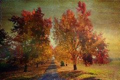 Country lane 346/365 (dred707..... very busy) Tags: autumn trees texture vanishingpoint dec lw 2011 p365 tisexcellence legacyexcellence coth5 sailsevenseas daarklandsexcellence hsexcellence rockpaperexcellence bestofshining artdigitalexcellence exoticimagespecial kurtpeiserexcellence petitexcellence gdgexcellence