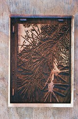 Blue (jjldickinson) Tags: wood shadow pine print cherry carving card cedar printmaking needles olympusom1 sanpedro woodblock conifer deodarcedar fujicolorsuperiaxtra400 mokuhanga laserengraving cedrusdeodora haryndeleon lasercuttingshop promastermcautozoommacro2870mmf2842 promasterspectrum772mmuv roll318