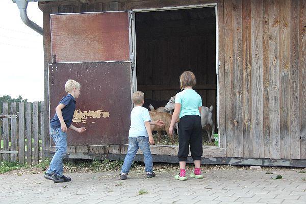 Kinder am Stall