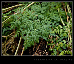 green ferns of winter (contemplative imaging) Tags: autumn plants usa plant fern green fall nature bike digital rural america wednesday photography countryside photo illinois cool midwest december day natural image cloudy photos path district country conservation overcast images il route trail ill american greens area imaging ferns crystallake midwestern 2011 mchenrycounty 85x11 prairietrail 11x85 olye3 nundatownship contemplativeimaging olyhg1454 ronzack 20111221 ci20111221e3prt