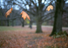 . (patrickjoust) Tags: park trees usa color fall film leaves analog america forest 35mm 50mm us md woods nikon focus fuji mechanical superia f14 united north patrick maryland rangefinder s baltimore 400 states manual 50 joust range finder hampden wyman estados xtra nikons fujicolor c41 unidos wymanpark nikkorsc50mmf14 fujicolorsuperiaxtra400 50mmf14sc autaut nikkorsc patrickjoust