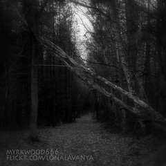 Hagalaz  (Myrkwood666) Tags: wood bw monochrome forest blackwhite symbol zwartwit sw schwarzweiss bos wald pagan rune futhark asatru hagalaz seelenwinter mrkskygge myrkwood666