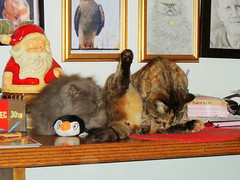 PPleezee !!! (carlene byland) Tags: santa christmas cats table penguin persian tabby legup