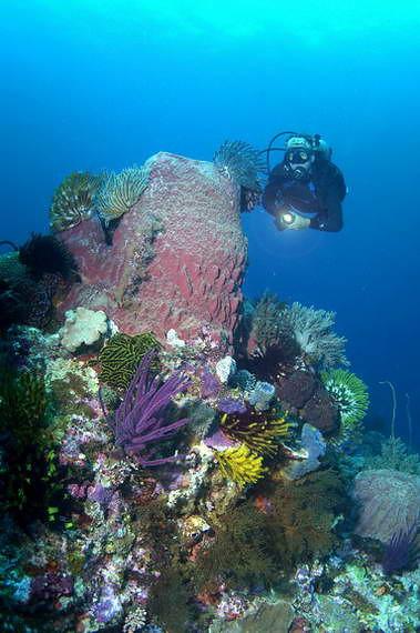 Under Water Hous Tour
