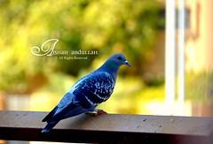 The Peace~ (Aishah Abdullah) Tags: