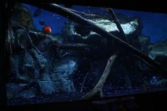 Newport Aquarium (Tugnutt) Tags: aquarium kentucky newport newportaquarium