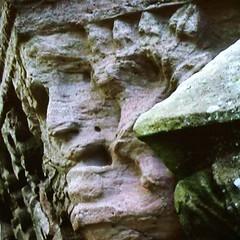 Green Man (tina negus) Tags: sculpture carving medieval greenman melroseabbey