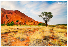 Uluru Tree (alonsodr) Tags: longexposure paisajes landscapes sony australia filter uluru alpha alonso graduated northernterritory ayersrock carlzeiss filtro largaexposicin degradado a900 alonsodr nd1000 gnd8 alonsodaz alpha900 cz1635mm