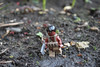 Tribal soldier (Thœ) Tags: urban leaves modern soldier this war lego mud fig zombie pirates rifle apocalypse carribean mini tribal assault jungle camouflage pistol minifig minifigs tactical apocalego vhmh