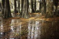 unspeakable (Nola Nate) Tags: trees reflection water landscape louisiana atchafalaya basin swamp cypress hendersonswamp ibeauty