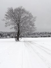 Big tree (radimersky) Tags: road winter snow tree field rural landscape countryside big europa europe sony poland polska polish cybershot fields zima nieg silesia slask lsk drzewo wielkie krajobraz wie opolskie wiejski due niwki dschx9v