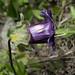 Flora di Machu Picchu (3)