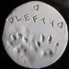 Lefty's pawprints (Jimmy Legs) Tags: kitten lefty lastnight fip 35months