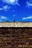 Checking out (Dirk Lambrichts) Tags: wall hasselt splinter shards glas muur chickweed scherven scherf bescherming bakstenen glasscherven afbakening