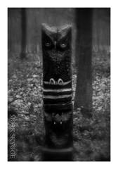 Dunkelheit LXIII (Myrkwood666) Tags: wood bw monochrome sign forest blackwhite symbol zwartwit totem sw schwarzweiss bos wald pagan dunkelheit seelenwinter mrkskygge myrkwood666