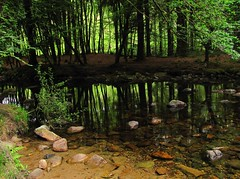 Still waters (Dazzygidds) Tags: england nature composition creek woodland reflections scenic tranquility devon serenity serene dartmoor tranquil atmospheric soothing westcountry harford ivybridge dartmoornationalpark alternating ukriver colourfulstones leafinlight sandyshore colorfulstones ermeriver treesinleaf
