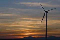 greenpower (Stanco) Tags: windmill germany deutschland geese hessen windenergy wea windkraft friedberg windmhle wetterau windenergie d90