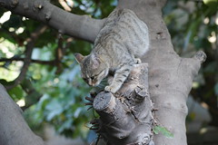 Hunting Cat (kezwan) Tags: cat hunting kezwan 1on1pets