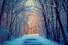 The Path to Narnia (gypsymare) Tags: morning trees winter sun snow sunrise hiking pennsylvania path hike trail lancaster february jennifermacneilltraylor
