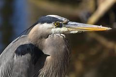 Pinokio (Largeguy1) Tags: bird animal pinokio
