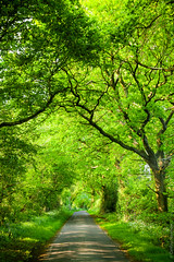Green oak road (Dmitri Naumov) Tags: road uk travel summer tree green nature leaves rural forest way outdoors evening oak alley woods branch britain path empty country scenic greenwood tunnel nobody foliage fairy journey lane environment lush asphalt pathway dense thicket nonurban