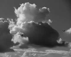 The Cloud (Supratim Ghatak) Tags: sky cloud birds canon is day clear kolkata canonpowershotsx110is