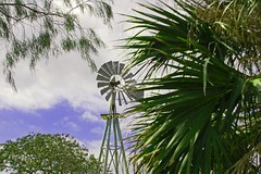 (roughshod) Tags: texas corpuschristi botanicalgardens