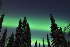 Aurora borealis - Aurores borales ( Mathieu Pierre photography) Tags: trip travel winter vacation snow tourism beautiful pine forest wonderful finland circle lights frozen scenery photographer sweden awesome year lappland north arctic aurora lapland stunning astronomy nordic finnish scandinavia northern incredible kiruna breathtaking scandinavian aurore finsko aurores borales laponie