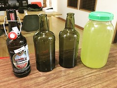 Ginger Beer with tumeric also going... (Mikey Sklar & Wendy Tremayne) Tags: bacteria beverages gingerbeer tumeric fermented fermentation nonalcoholic probiotics guthealth uploaded:by=flickstagram instagram:photo=1190306729778167063804953022 guthealing