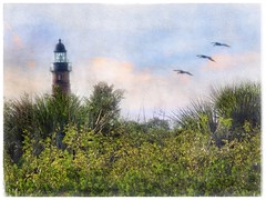 Evening flight (Solly Avenue) Tags: painterly photomanipulation landscape coastal impressionism digitalphotoart ipadpainting ipadsketching painterlyapp