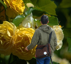 Guy or Girl (swong95765) Tags: flowers roses woman male art girl bokeh gender androgynous