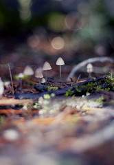 Mushrooms (JesseMari) Tags: life light macro cute nature mushrooms 50mm moss nikon dof bokeh naturallight fungi tiny alive f18 greencolor nikond90