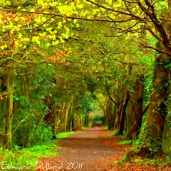 Jenkinstown Wood. (Edward Dullard Photography. Kilkenny, Ireland.) Tags: wood autumn kilkenny ireland painterly fall forest automne camino path herbst trail impressionism magical photoart enchanted autunna colorphotoaward otone