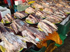 Squid, Market, Seoul, South Korea (Chaloos) Tags: asia korea korean asie southkorea rok coreedusud