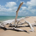 "Driftwood <a style=""margin-left:10px; font-size:0.8em;"" href=""http://www.flickr.com/photos/14315427@N00/6417685627/"" target=""_blank"">@flickr</a>"
