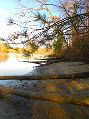 My Lunch Spot (Maureclaire) Tags: autumn trees beach water river ma sand afternoon herbst herfst logs el evergreens otoo  riverbank autunno haust pinetrees outono hst ctriver connecticutriver syksy podzim hsten fallentrees westernma musim sonbahar ruska jesen bartoncove efterr sz lautomne   gugur gillma jesieni   jeseni mygearandme blinkagain