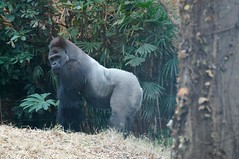2011-12-04_15-54-47_ueno_zoo